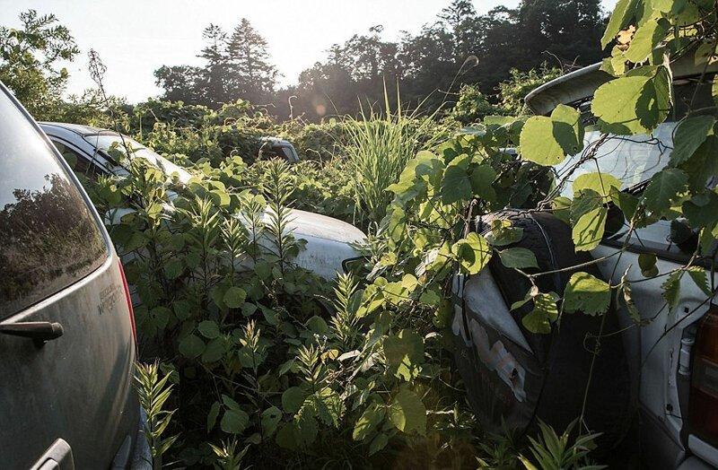 Зона отчуждения Фукусимы, заброшенная после аварии   Интересное