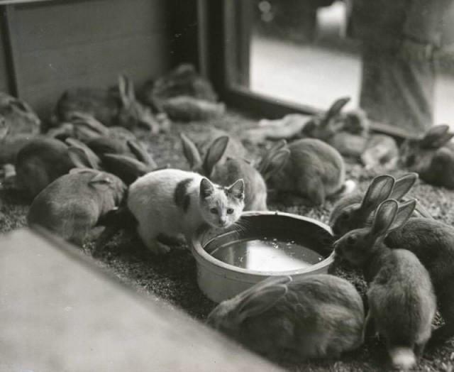 Архивные фото и моменты из прошлого. МиР