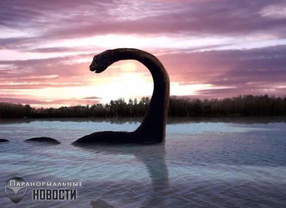 Наблюдение необычных зверей на Аляске Тайны и мифы