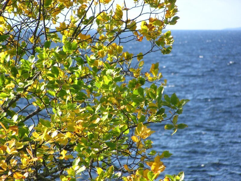 Неклассический Валаам. Прогулка по скалистому побережью острова путешествия,Путешествие и отдых