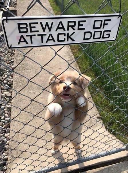 25 злобных собакенов, которых поставили охранять Интересное