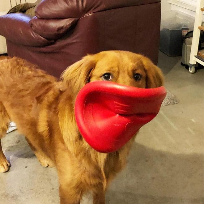 13 забавных фото собак, поймавших фрисби. В конце бонус! Приколы,игрушки,приколы,смешные фото,собаки