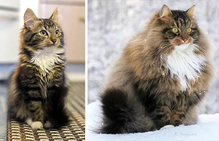 20 кошачьих фото, которые запросто взломают ваше сердечко Интересное