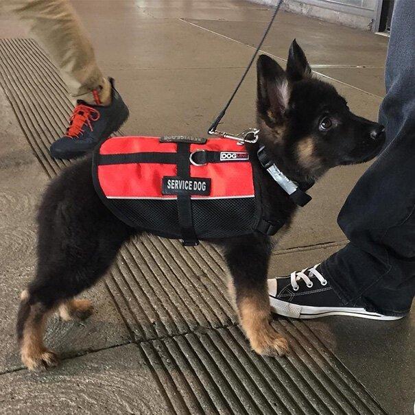 Фотографии щенков в свой первый день на службе Интересное