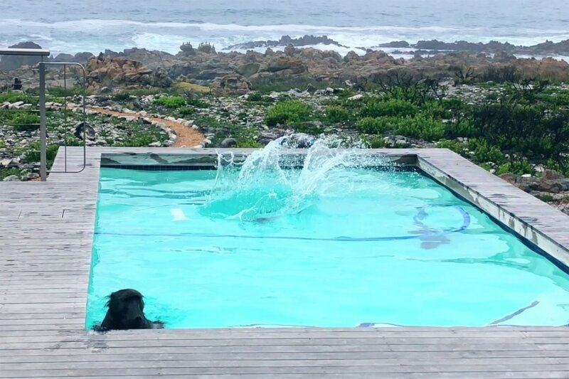Бабуины хорошо провели время у бассейна   Интересное