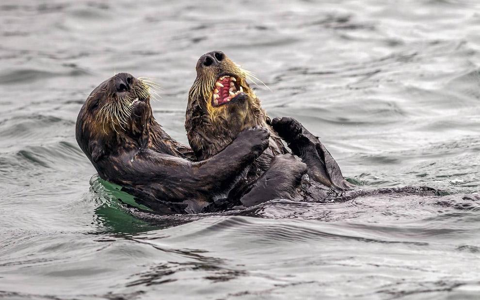 Необычный конкурс Comedy Wildlife Photography Awards 2019 Интересное