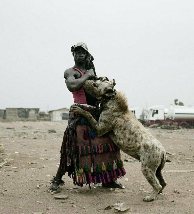 Приручение гиен в Африке Африка,гиены,животные,интересное,факты,приручение
