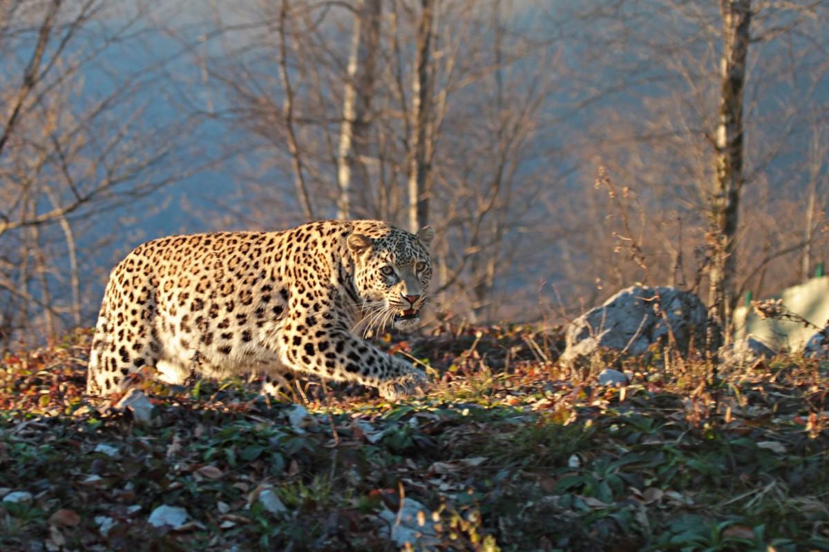 6 видов животных находятся на грани вымирания в России животные,природа,Россия